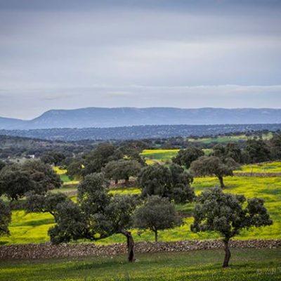 La Junta investiga en Hinojosa del Duque con nuevas tecnologías la producción de pasto y bellota en dehesas