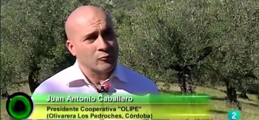 Olipe y WWF denunciaron la situación de la dehesa y el olivar en TVE [vídeo]
