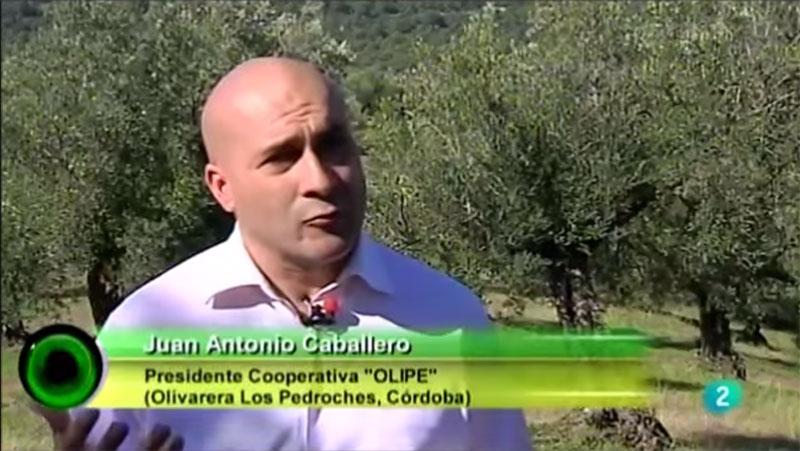 Olipe y WWF denunciaron la situación de la dehesa y el olivar en TVE