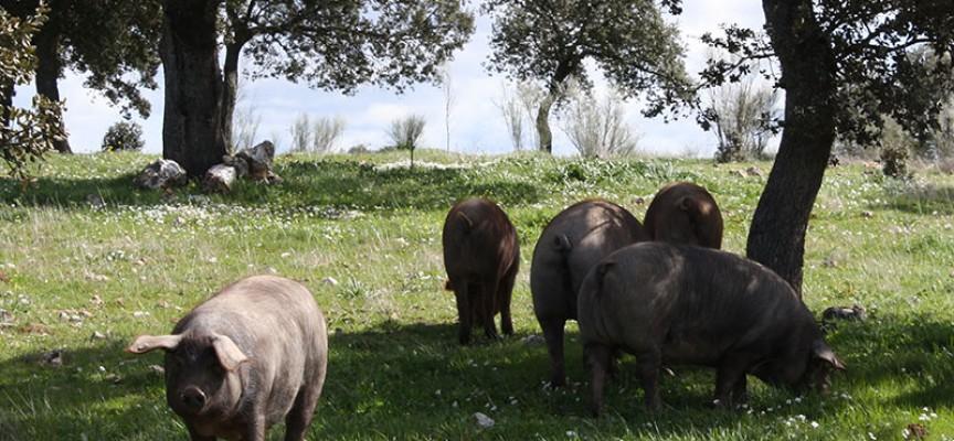 Europarlamentarios de la Comisión de Agricultura y Desarrollo Rural visitarán explotaciones de Los Pedroches