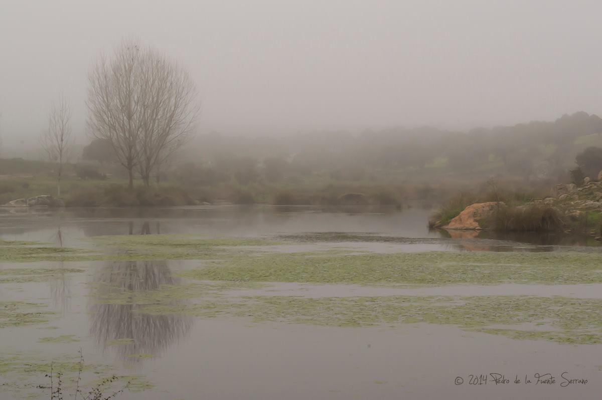 Niebla - Pedroche