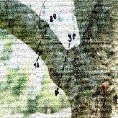 Olivarera Los Pedroches organiza un curso sobre poda del olivar