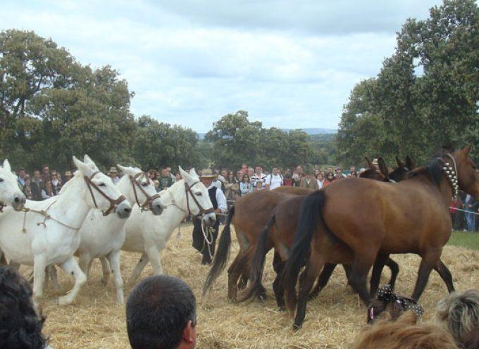 La jornada Nuestras Tradiciones de 2016 en Pedroche sera el 17 de abril