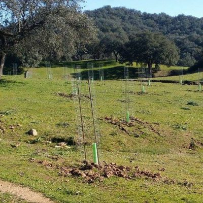 Mallas Galbis contribuye a la plantación de casi medio millón de árboles en un año