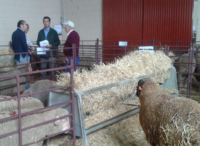 La subasta de ovino y la presentación de Añora protagonizan el tercer día de feria