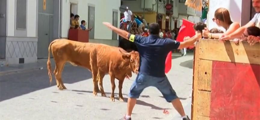 Reportaje de la suelta de vaquillas de El Viso en Onda Mezquita TV [vídeo]