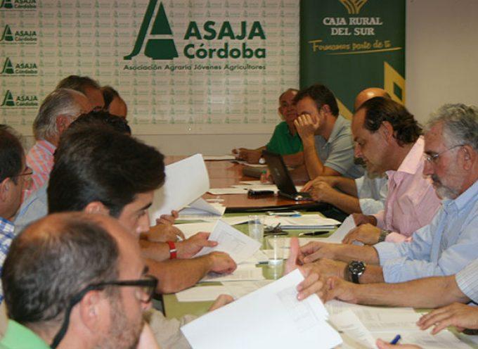 Asaja estima una recuperación del sector del cerdo ibérico