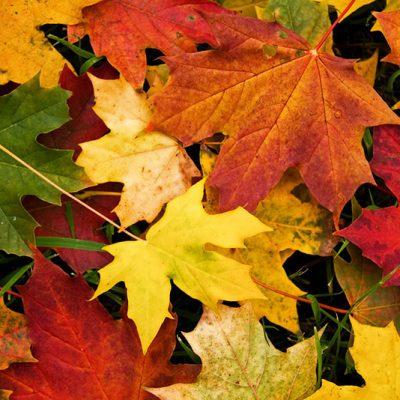 Y llegó el otoño… otra vez