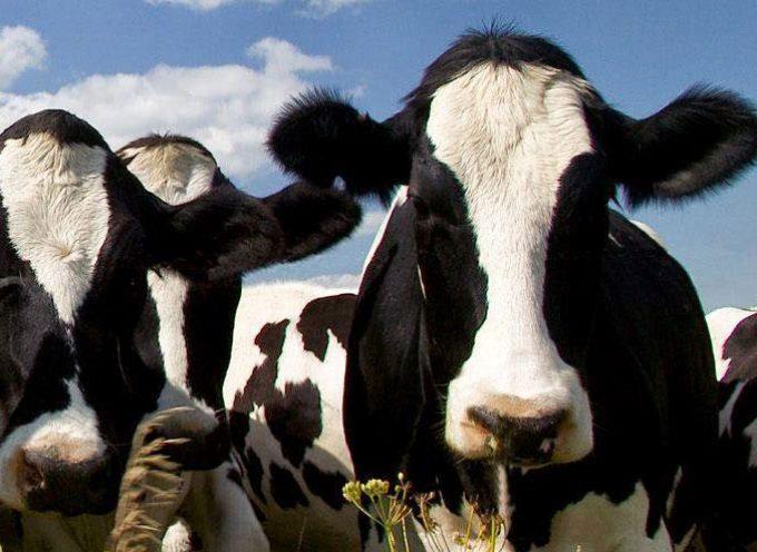 La Comisión Europea presenta nuevas medidas de apoyo al sector lácteo por valor de 500 millones de euros