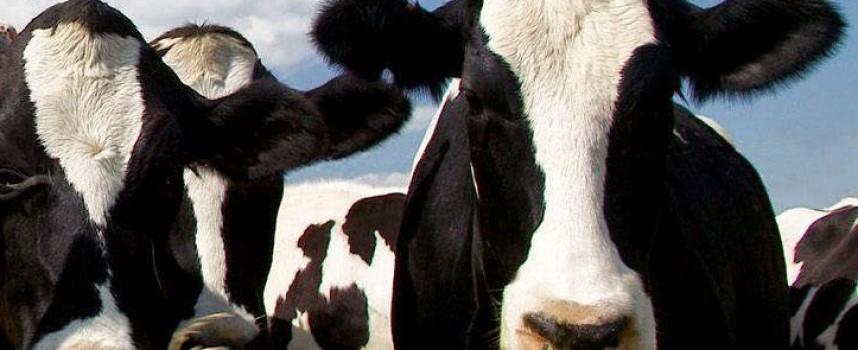 La Junta otorga 246.000 euros a un proyecto para abordar el problema de los residuos ganaderos en Los Pedroches