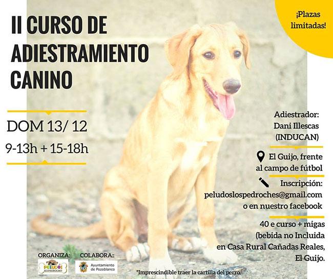 curso-de-adiestramiento-canino
