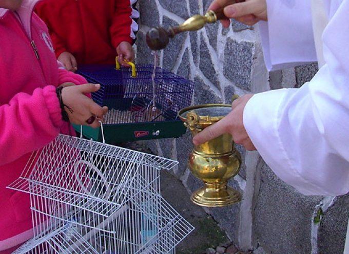 Festividad de San Antón en Los Pedroches