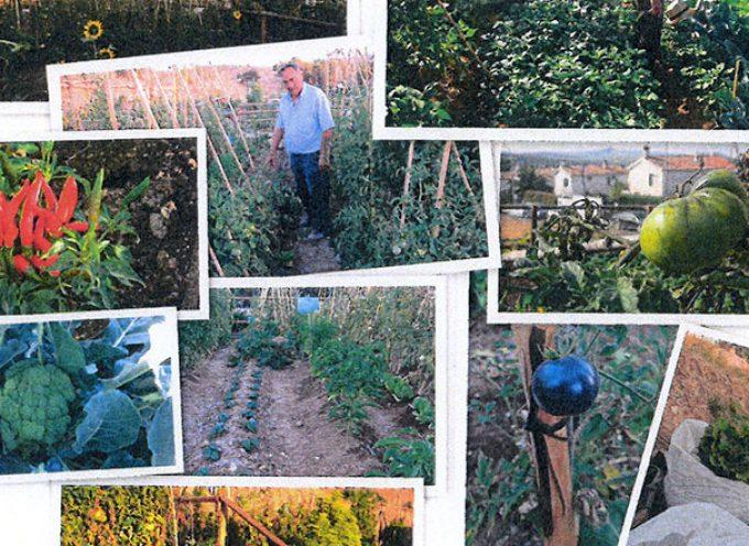 Un curso sobre huertos urbanos en Cardeña