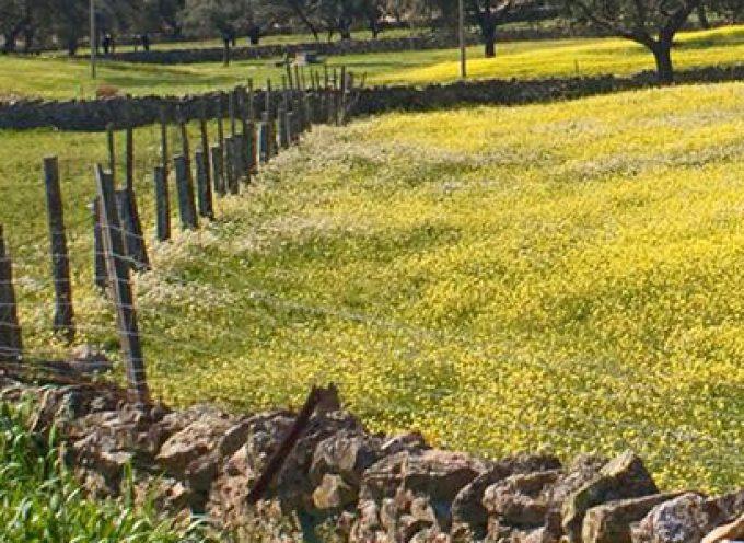 Una jornada técnica en Villanueva de Córdoba sobre nuevas oportunidades y retos para la dehesa