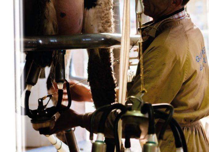 El porcino ibérico vuelve a la Feria Agroganadera tras 20 años de ausencia