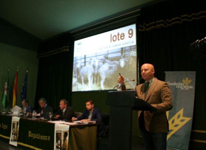 Subasta de ovino, concurso de caballos y presentación de Fuencaliente en Pozoblanco
