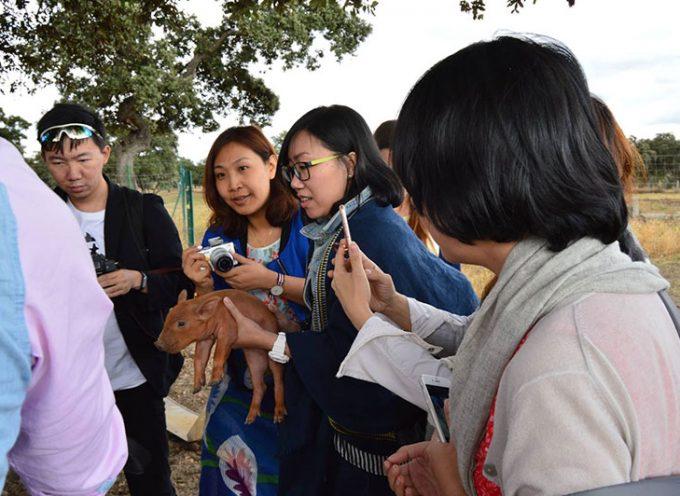 Periodistas y blogueros chinos visitan Los Pedroches para conocer el mundo del jamón
