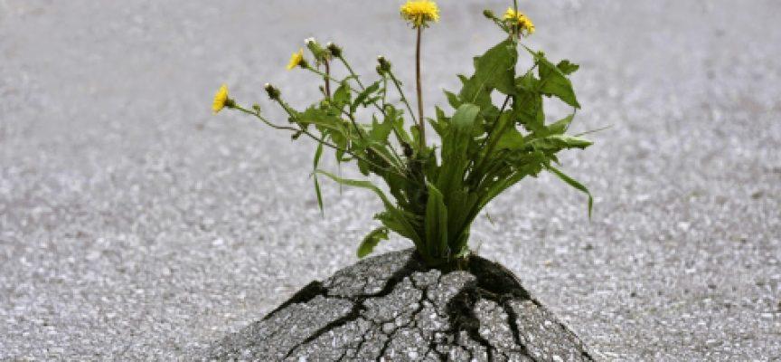 Hablamos sobre la 'resiliencia' [audio]