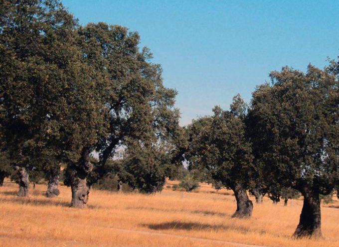 Una jornada sobre la dehesa, 'Vida en el territorio y la sociedad', en Hinojosa del Duque