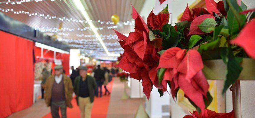 Las bases de participación del Mercado Navideño 2017 de Pozoblanco