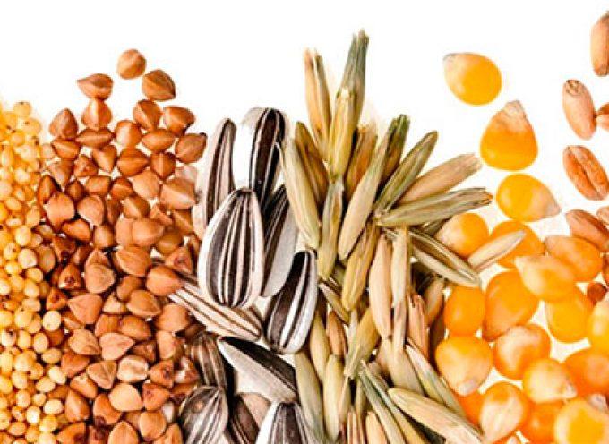 Distribución de semillas autóctonas para huertos en El Guijo
