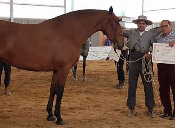 La yeguada El Romerito mejor ganadería de la Feria Agroganadera