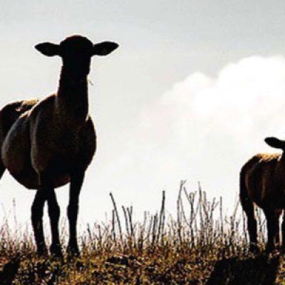 Llega la sexta edición de la Feria del Pastoreo de Villaralto