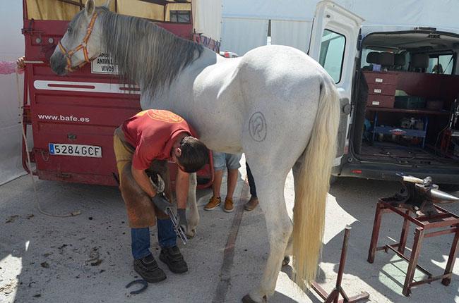 Herraje de caballos