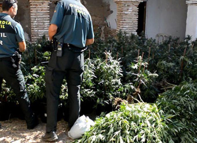 Desmantelada una plantación de marihuana y detenida una persona en Villanueva de Córdoba