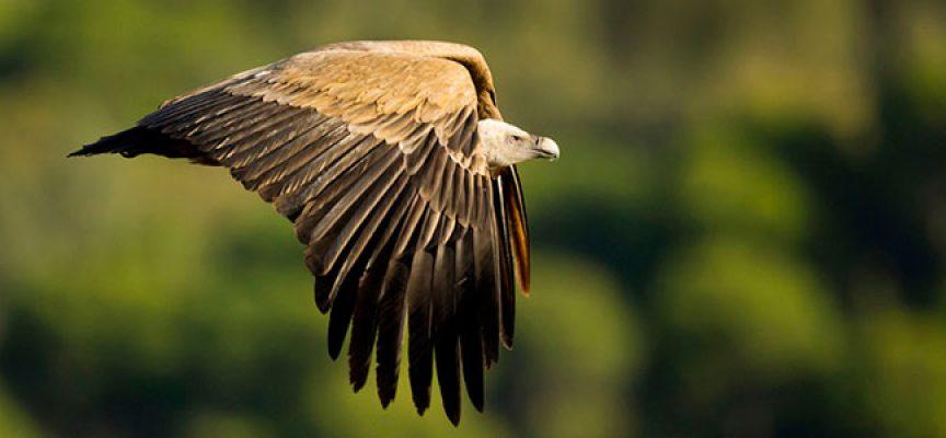 El XII Premio Bolo de Fotografía del Parque Natural Sierra de Cardeña y Montoro