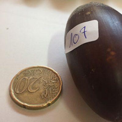 La 'Bellota Más Grande' de Los Pedroches pesa 30,72 gramos