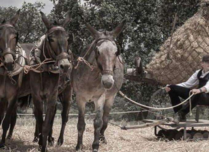Organizado un certamen fotográfico para 'Nuestras Tradiciones 2018' de Pedroche