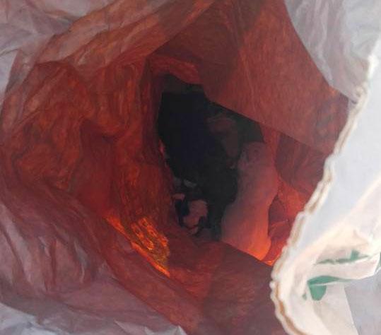 La Policía Local de Villanueva de Córdoba rescata 6 cachorros de perro de un contenedor de basura