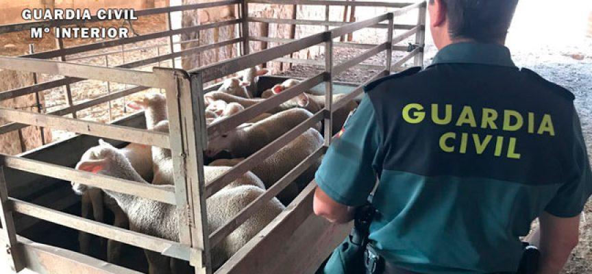El operativo contra el robo de ganado culmina con un detenido en Villanueva del Duque