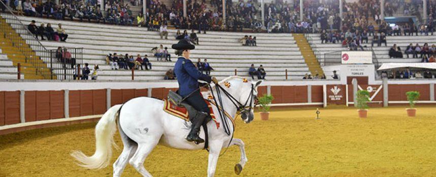 La grandeza del caballo andaluz en Pozoblanco