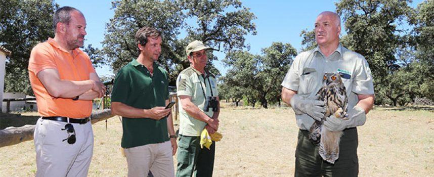Liberados dos ejemplares de búho real en el Parque Natural Sierra de Cardeña y Montoro