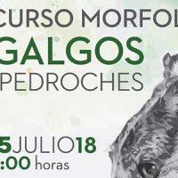 Un concurso morfológico de galgos en Añora