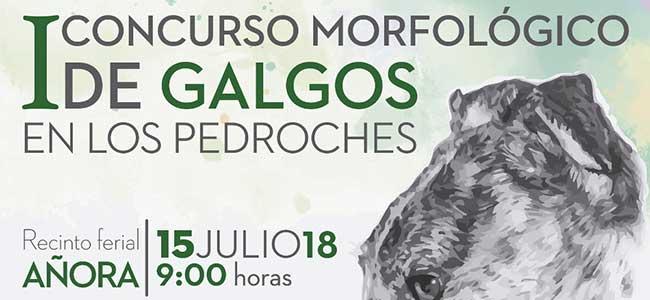 I Concurso morfológico de Galgos en Los Pedroches