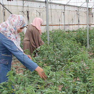 El Ayuntamiento de Pozoblanco concede una subvención a la Asociación Europea de Cooperación con Palestina