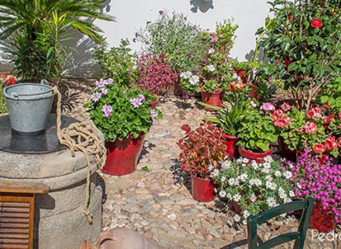 El Patronato de Turismo organiza rutas para visitar los patios, balcones y rincones típicos de  la provincia