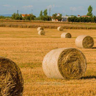 Asaja Córdoba alerta de la falta de pastos en las explotaciones ganaderas