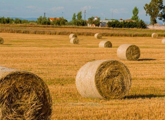 Autorizado el uso de alimento convencional para el ganado ecológico como medida excepcional por la sequía
