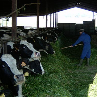 Un informe plantea la necesidad de gestionar los residuos de la ganadería intensiva de Los Pedroches