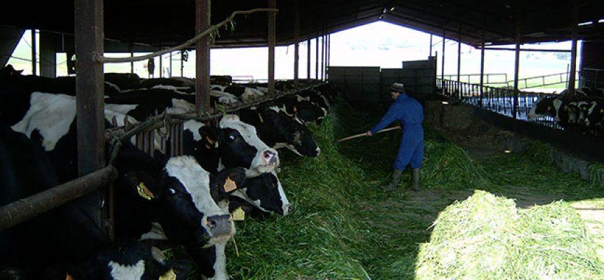Unas jornadas abordarán el trabajo y las conclusiones del proyecto de aprovechamiento de los residuos ganaderos