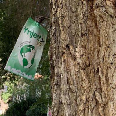 El Ayuntamiento de Pozoblanco realiza una innovadora campaña de saneamiento en 70 olmos