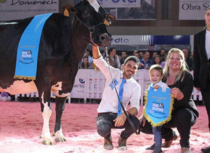 Éxito de público en las dos jornadas de la XII Feria del Ganado Frisón