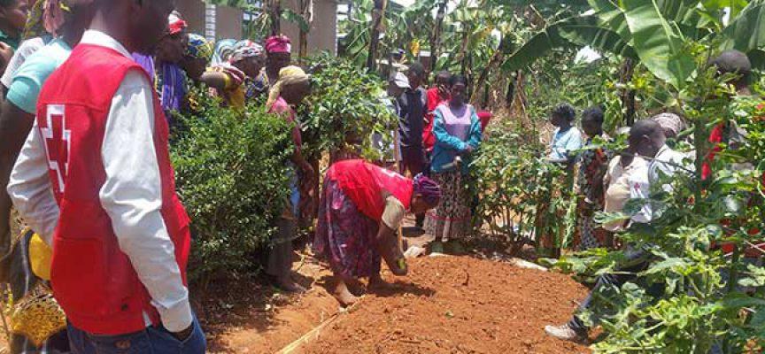 Hinojosa del Duque, El Viso y Belalcázar apoyan un proyecto de Cruz Roja en Ruanda