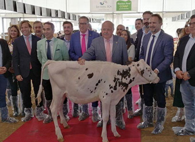 La XII Feria del Ganado Frisón reúne a 20 ganaderías y 75 animales