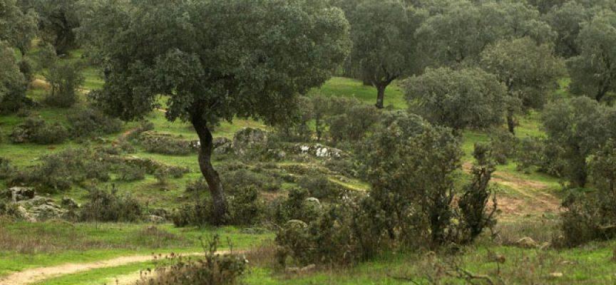 La Junta licita por 443.000 euros un proyecto de tratamientos silvícolas  en el Parque Natural de Cardeña y Montoro